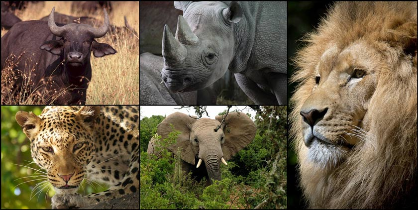 collage africa big 5 840