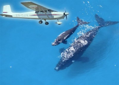 Whale Watching Flights