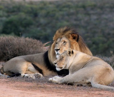 This is Africa- Big 5 Safari Tour