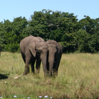 Garden Route - Addo Elephant Park 5-day Tour