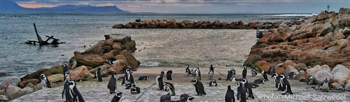 Penguins and Seabirds